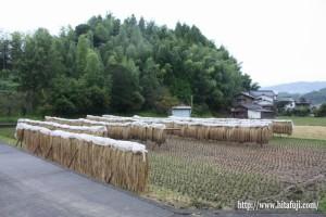 竹ざおに掛けてある古代米