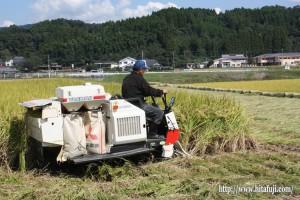 稲刈り25.10.7