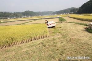 稲刈り25.10.12