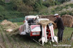 古代米脱穀作業②