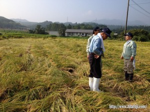 稲被害調査25.9.13