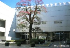日田市中央公民館②