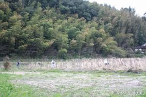東有田公民館裏田んぼ草刈り26.3.29 ②