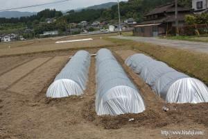 稲種箱詰めと田んぼに下ろす作業26.5.11③