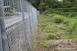 ウッド調整池内の草刈り26.8.17
