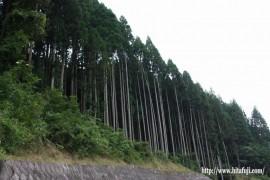 美しい日田杉