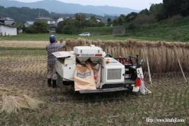 古代米脱穀作業①26.10.19