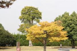 色付いた木
