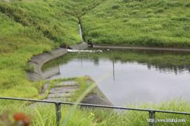 調整池に汚い水が流れ込む