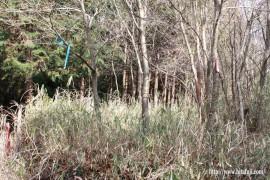 一尺八寸山捜索活動27.1.24 ④林道沿いには市有林