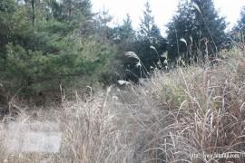 一尺八寸山捜索活動27.1.24 ⑤林道は藪茂る