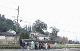 遠くから見た平島天満宮の保存樹木