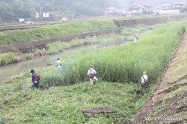 有田川草刈り27.5.31 ①
