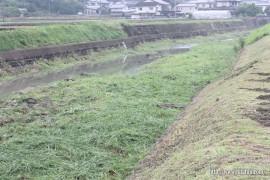 有田川草刈り27.5.31 終了②