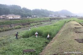 有田川草刈り27.5.31 ②