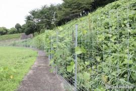 調整池からの水路・草刈り作業②27.8.16