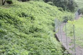 調整池からの水路・草刈り作業①27.8.16