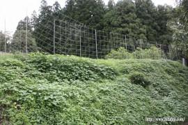 本村畑草刈り前②
