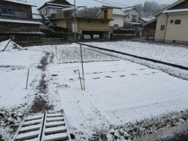 初雪31.1.26③