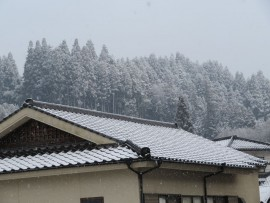初雪31.1.26②
